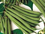 Green Pod Stringless (The Dirty Gardener Stringless Green Pod Beans, 1 Pound)