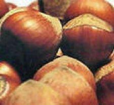 Best hazelnut tree live plants list