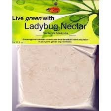 Ladybug Lure - Ladybug Nectar to Help Keep Beneficial Insects in Your Yard and Garden
