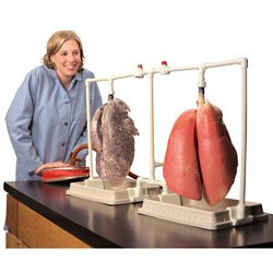 Nasco Dual Lungs Comparison Kit - Dissection & Science Education Materials - LS03802 (Inflatable Lungs Kit)