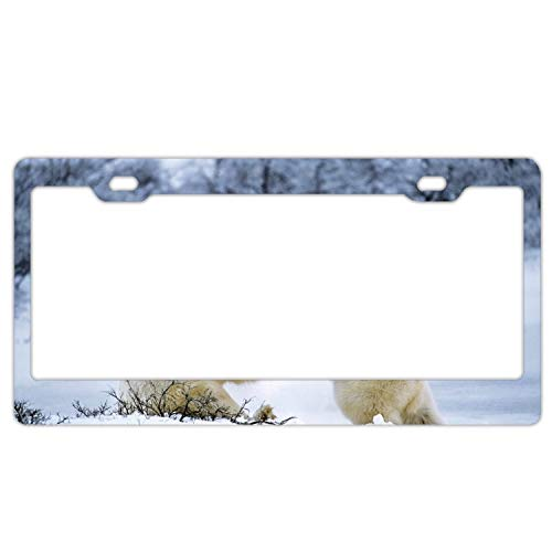 (Sbfhdy Product Express Polar Bear Couple Playful Snow Personalized Metal License Plate Frame)