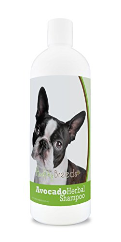 Healthy Breeds Herbal Avocado Dog Shampoo for Dry Itchy Skin for Boston Terrier  - OVER 200 BREEDS - For Dogs with Allergies or Sensitive Skin - 16 oz