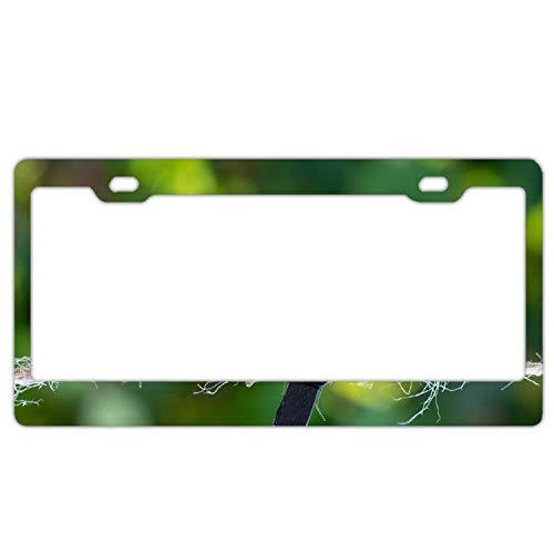 ASLGlicenseplateframeFG Clothespin Heart Love Blur2 License Plate Frame Aluminum Protector Car Tag Frame -