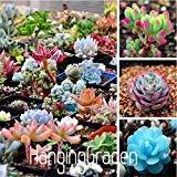 100 Rare Mix Lithops Seeds Living Stones Succulent Cactus Organic Garden Bulk Seed,#56MDPY