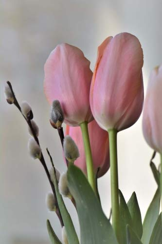 Blush Pink Tulips and Pussy Willows Spring Flowers Journal: 150 Page Lined Notebook/Diary (Netherlands Florist)