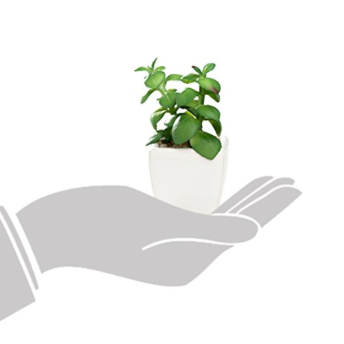 Nattol Modern Mini Artificial Succulent Plants Potted in Cube-Shape White Ceramic Pots for Home Decor, Set of 4 (White) by Nattol (Image #7)