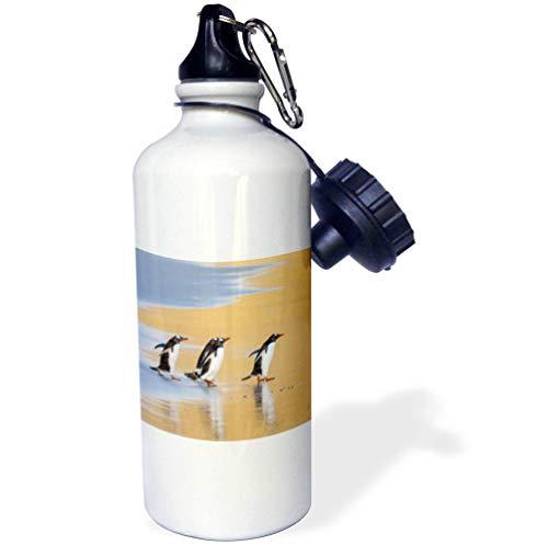 3dRose Danita Delimont - Penguins - Gentoo Penguins, Pygoscelis Papua, Falkland Islands. Walking in line. - Flip Straw 21oz Water Bottle (wb_314372_2) ()
