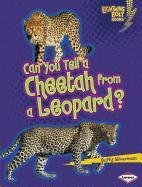 Can You Tell a Cheetah from a Leopard? (Lightning Bolt - Alike Predator Look