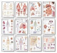 The Body Systems Chart Set: Laminated Wall Chart
