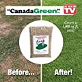 Canada Green Grass Lawn Seed - 8 Pounds