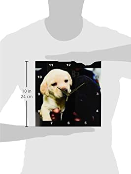 3dRose Black and Yellow Lab Puppies Wall Clock 10 by 10-Inch