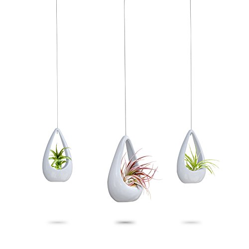 3 Pack Hanging Planter | White Ceramic Succulent Pots | Round Air Plant Holder Container | Cactus Pot with Metal Wire Hanger | 23 Bees (3 Pack x White) Ceramic Hanging Planters