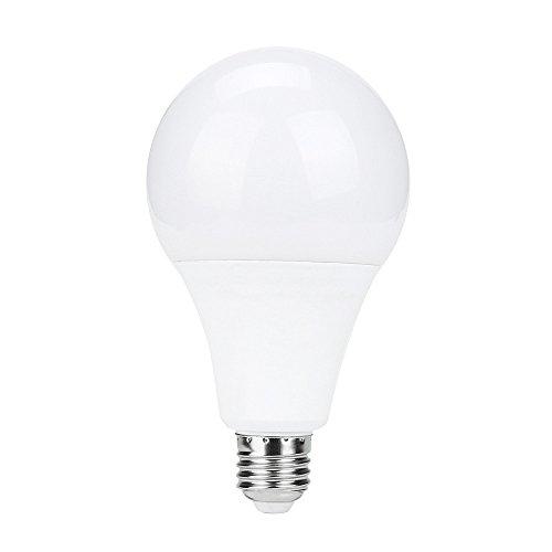 C4 Led Christmas Light Bulbs in US - 5