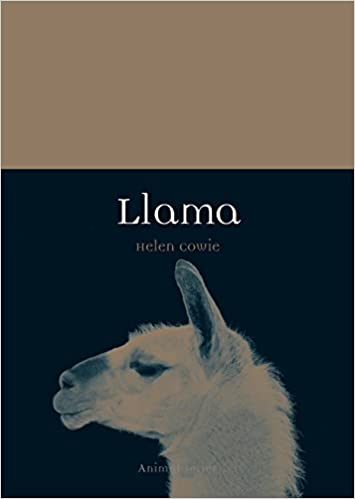 Llama (Animal)