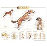 Canine Skeletal System Anatomical Chart, Anatomical Chart Company Staff, 1587796880