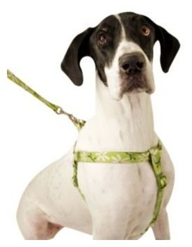 eave Step-In Harness, 18-26-Inches, Daisies (Daisy Dog Harness)