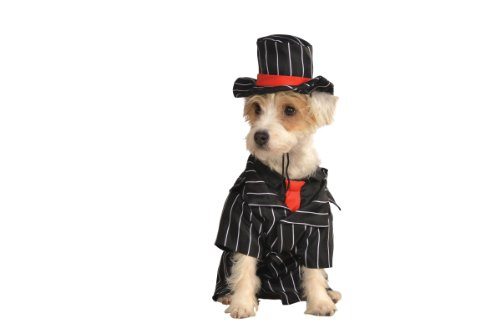 Rubie's Pet Costume, Small, (Family Costumes Theme)