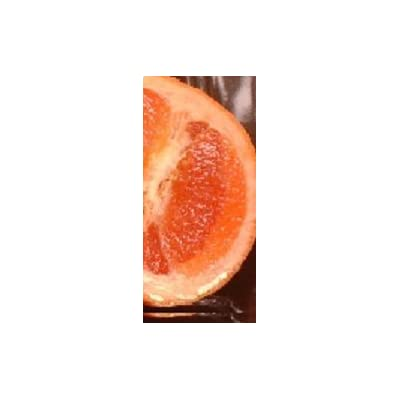 Moro Blood Orange Tree (2 Year Old) Can not ship any citrus outside the state of Texas : Garden & Outdoor