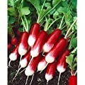 French Breakfast Radish Seeds - Raphanus Sativus - 3 Grams - Approx 300 Gardening Seeds - Vegetable Garden Seed