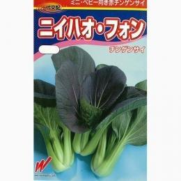 ちんげん菜 種 ニイハオフォン 2dl B00NHD3Q7Q