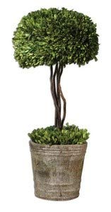 Uttermost Preserved Boxwood Tree Topiary 14 x 14 x - Preserved Tree Topiary