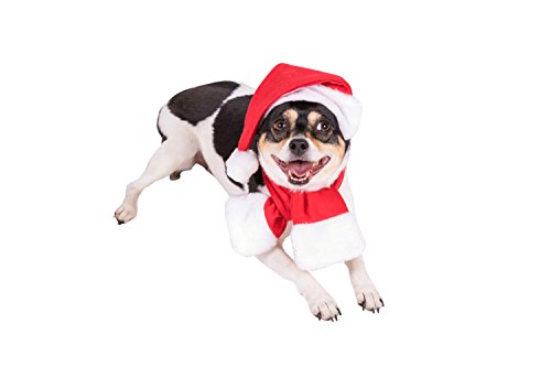 (Clever Creations Red and White Santa's Hat and Scarf Christmas Dog Outfit | Festive Holiday Pet Costume | Perfect for Many Breeds | Hat Measures 6.5