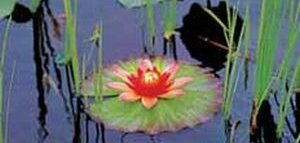 Golden Pond Imagine Decorative Floating Lily Pad Lights