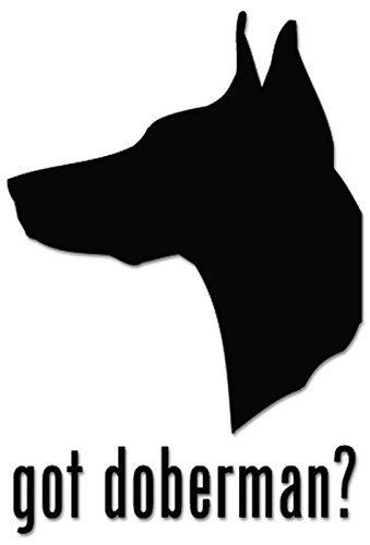 YWS Vinyl Stickers Decals - Got Doberman Pinscher Dog Pet - Stickers Laptop Car Truck Window Bumper Home Decor SMA2312