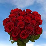 GlobalRose 8 Dozens of Fresh Cut Red Roses - Fresh Flowers For Birthdays, Weddings or Anniversary.