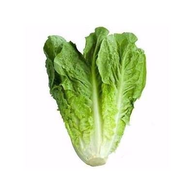 """Parris Island"" Romaine Lettuce Seeds, 1000+ Premium Heirloom Seeds, Delicious & Crisp! (Isla's Garden Seeds), Non GMO, 85% Germination, Highest Quality! : Garden & Outdoor"