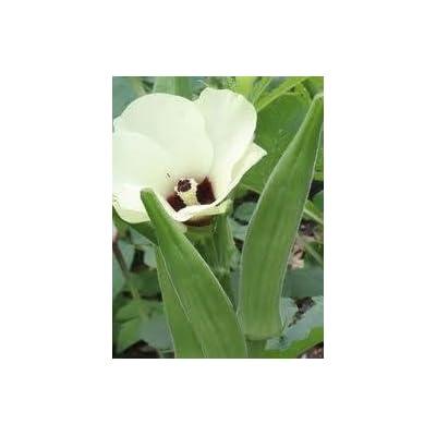 HeirloomSupplySuccess 100 Heirloom spineless clemson Okra seeds: Everything Else