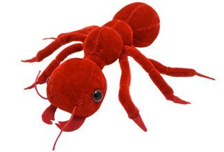 Amazon.com: Giant Microbes Ant Solenopsis Invicta Science Kit, Red ...