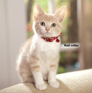 Safety Bell (Coastal Pet - Adjustable Reflective Kitten Safety Collars w/ Bell,Color Red)