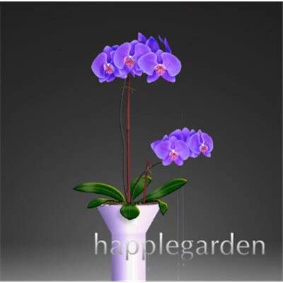 Kasuki 100pcs Phalaenopsis Orchid,Phalaenopsis Plants,Bonsai hydroponic Flower Bonsai for Four Seasons, Rare Orchid Flower Easy to Grow - (Color: 3): Garden & Outdoor