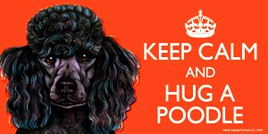Poodle Black Dog Gift - 'KEEP CALM' LARGE colourful 4' x 8' MAGNET - High Quality flexible magnet for indoor or outdoor use for your Fridge, Car, Caravan or use on any flat metal surface -Water proof and UV resistant. Car-Pets Ltd