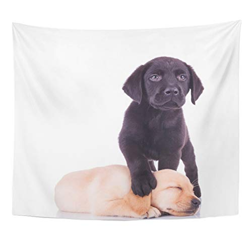 low Puppy Little Black Labrador Standing with Paw on Sleeping Puppy's Head White Lab Home Decor Wall Hanging for Living Room Bedroom Dorm 50x60 Inches ()