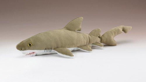 Sand Tiger Shark 12