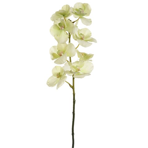 """31"""" Vanda Orchid Spray Two Tone Green (Pack of 6)"""