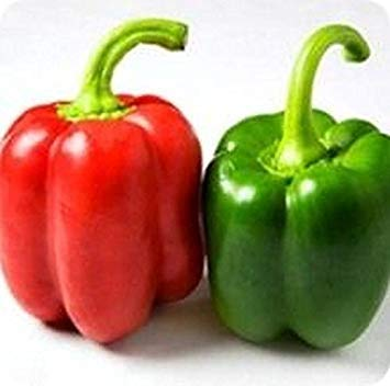 Germination Seeds: 50 - Seeds: Yolo Wonder Bell Pepper-Great Yielding Bell Pepper!! Sweet & Juicy