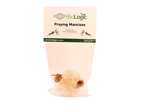 Praying Mantis Egg Cases - 2 Extra Large Cases