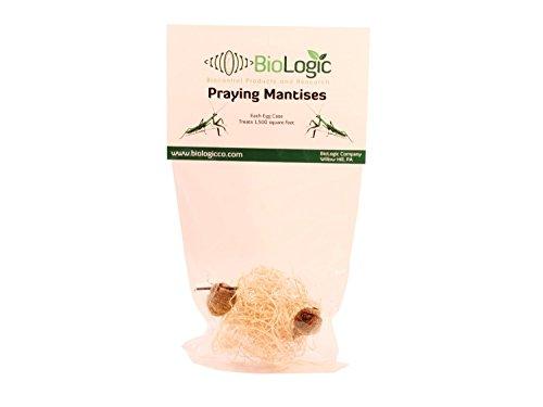BioLogic Company, Inc. Praying Mantis Egg Cases - 2 Extra Large Cases ()
