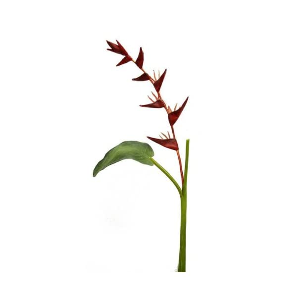 Renaissance 2000 Decorative Hanging Heliconia Spray, 48.80-Inch, Red