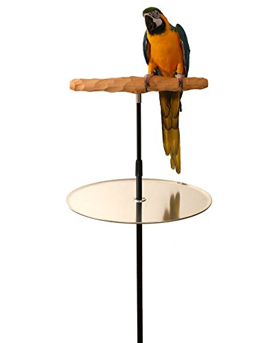 (Parrot Training Perch Stand With Potty Tray (XL T Perch Hardwood))