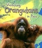 Watching Orangutans In Asia (Wild