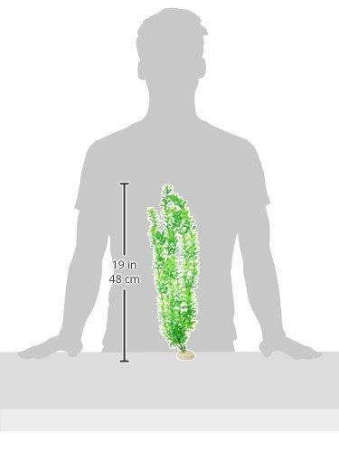 Amazon.com : eDealMax Planta de hierba de agua plástico del tanque de pescados, 19.3 pulgadas de altura, Verde : Pet Supplies