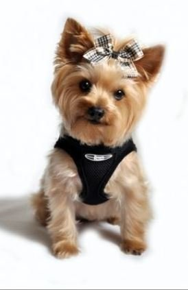 Doggie Design Ultra Usa Choke-free Dog Harness – Limo Black – Sm (13″ – 16″ Girth), My Pet Supplies
