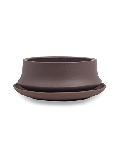 Dahlia Shallow Purple Clay Succulent Planter/ Plant Pot/ Flower Pot w. Saucer, Dark Brown (Pots Clay Shallow)