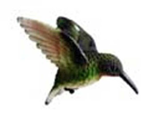 Clark Collection CC52033 Ruby Throated Hummingbird Window Magnet, multicolored