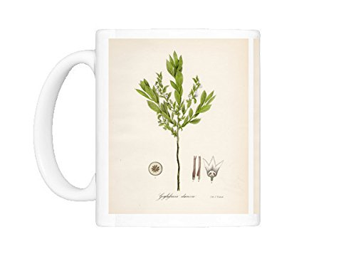 (Mug of Huckleberry botanical engraving 1843 (13610829))