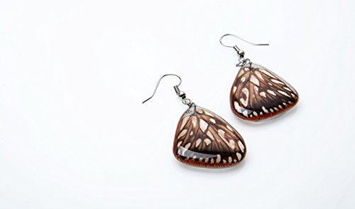 Butterfly wings earrings Real Dione juno, silver 925 handmade